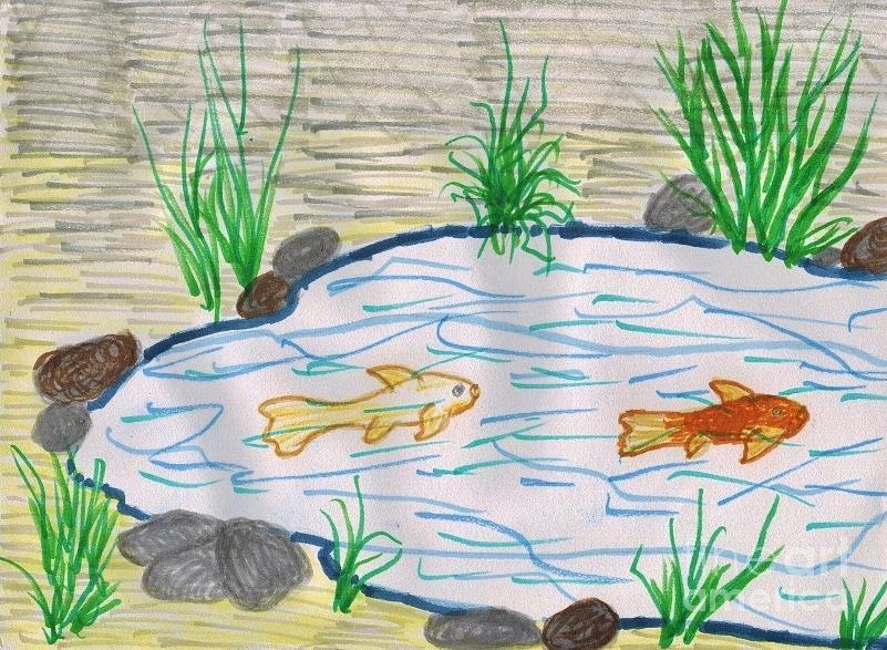 Drawn pond fish pond  Drawing Fish Pond