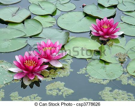 Drawn pond lily pond Illustration water Stock Stock water