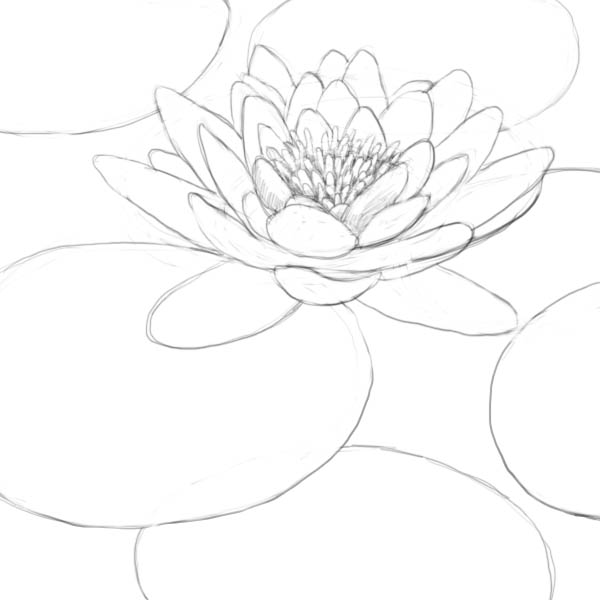 Drawn pond lily pond Drawing (water a PondTattoo to