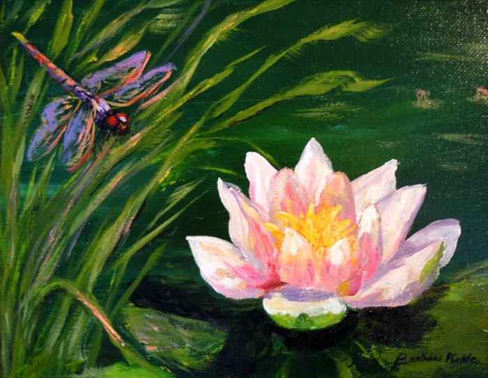 Drawn pond lily pond Dragonfly Pirkle Dragonfly Lily by