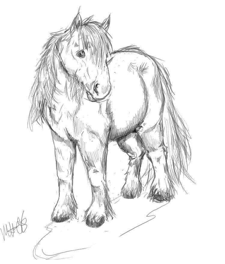 Drawn pony line art By on Shetland A DeviantArt