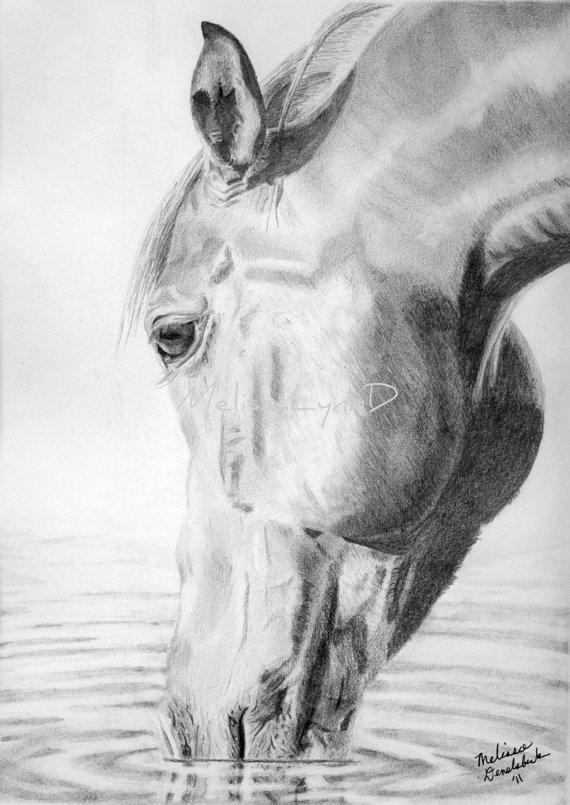 Drawn buck drinking water Of 00 print drawing drawing