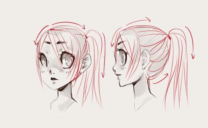 Drawn ponytail sketch Draw Illustrators Trichology Draw Ponytails