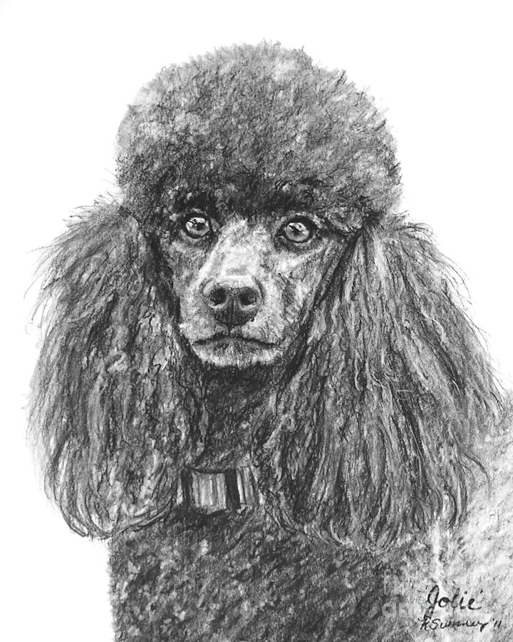 Drawn poodle Black Sketched Poodle Sumners In