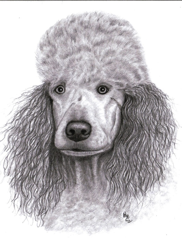 Drawn poodle bow Drawing Page 3 graphite Art