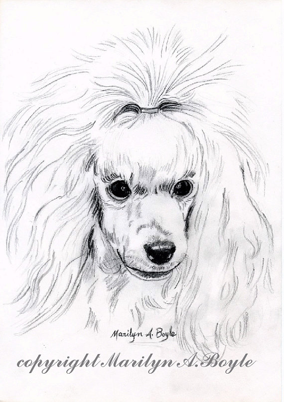 Drawn poodle abstract Drawing POODLE;art white painting! DRAWING