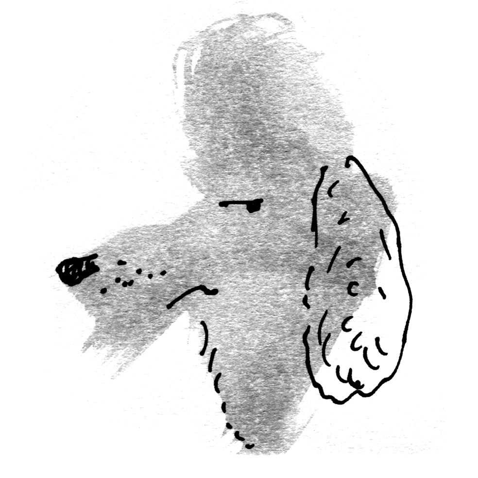 Drawn poodle bad August endpapers poodle x whoodle