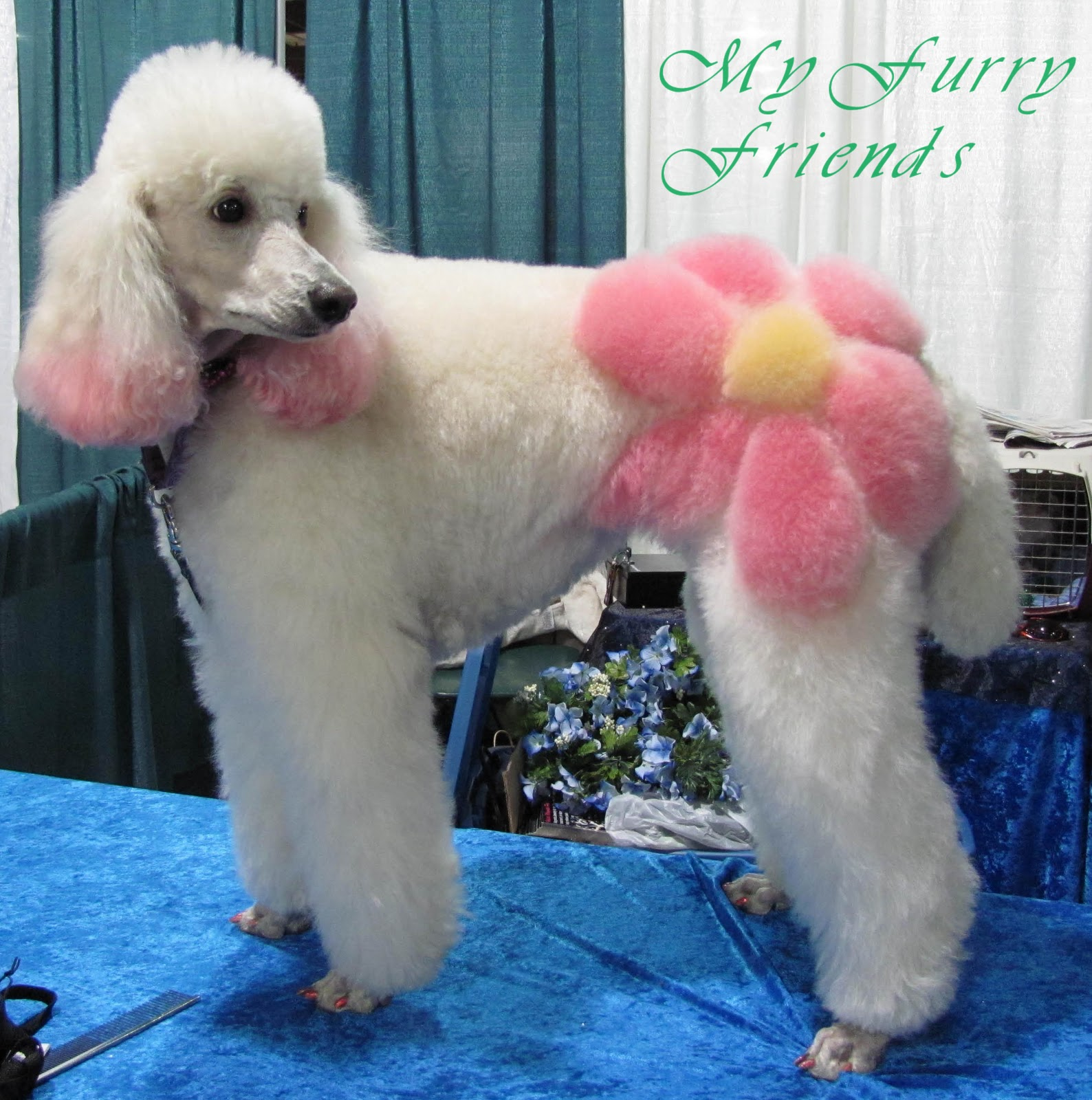 Drawn poodle bad Bad The Grooming: Pet The