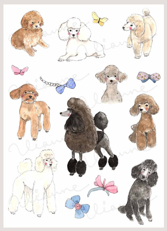 Drawn poodle bow Watercolor  CLIP of cute