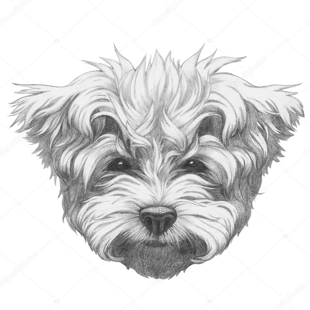 Drawn poodle bow — bow with glasses bow