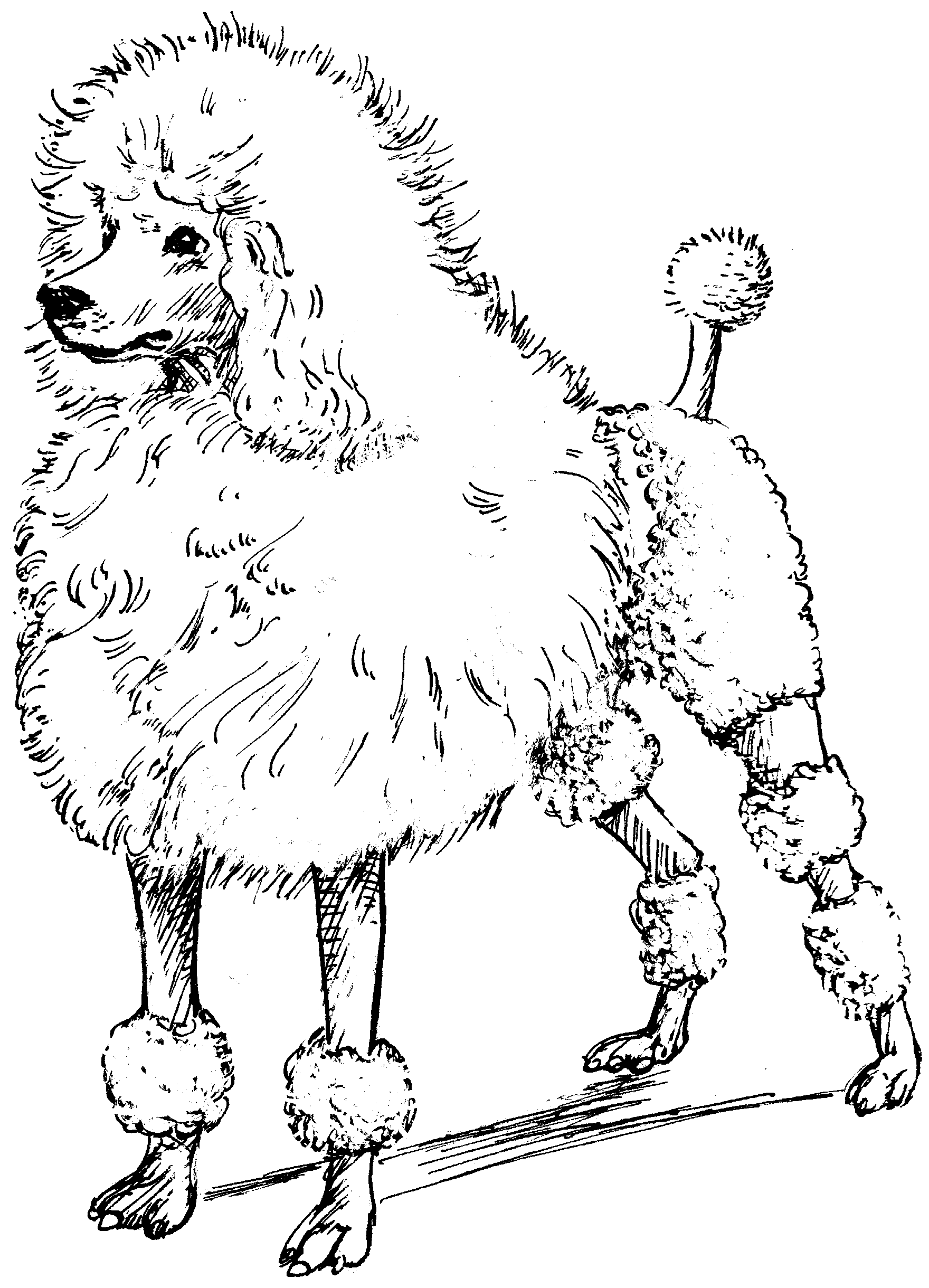 Drawn poodle clip Printable Clip Full Size Image