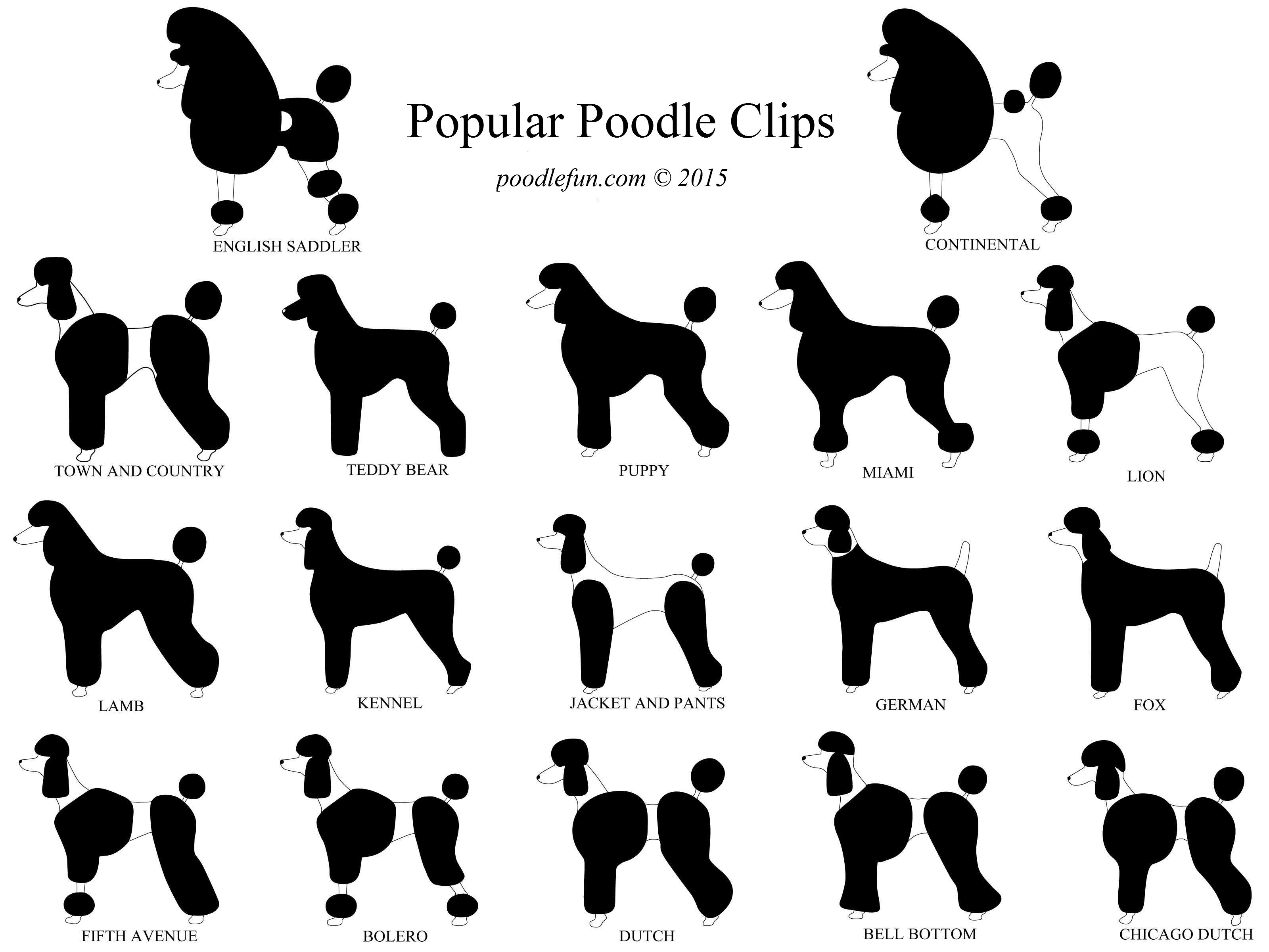 Drawn poodle continental Google modified continental Search stuff