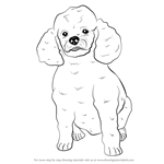 Drawn poodle face Step (Farm  Animals) by