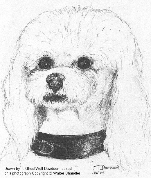 Drawn poodle face  Black Art Terrier White