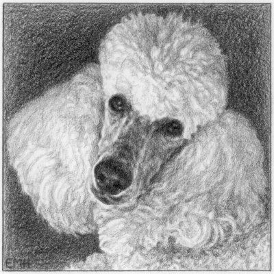 Drawn poodle face White Poodle on 133 Pinterest