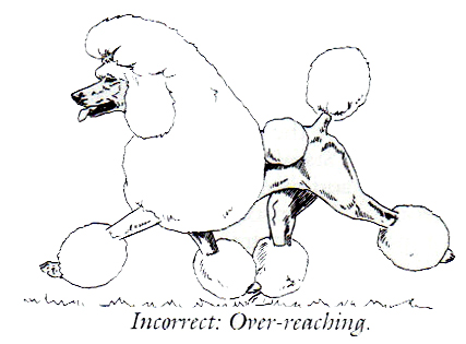 Drawn poodle natural Crufts Geeson have comment More