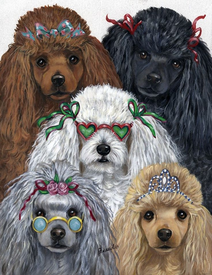 Drawn poodle natural Pinterest drawing of images I