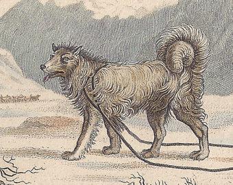 Drawn poodle natural Poodle) Chien Etsy de Antique