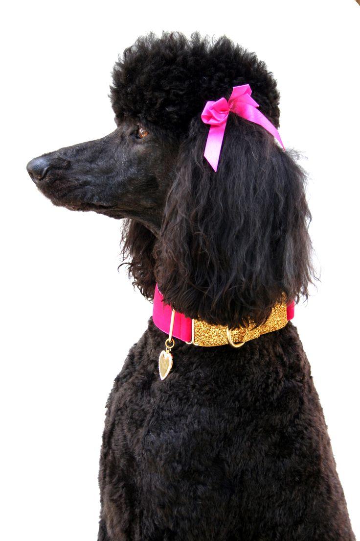 Drawn poodle natural Collar Dog images Pinterest Oh