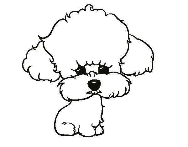 Drawn poodle simple Para poodle Dog de Poodle