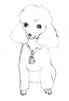 Drawn poodle simple Search Google how artist for