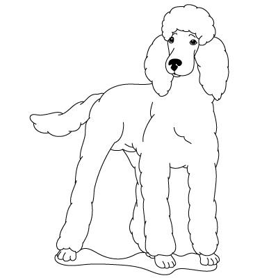 Drawn poodle simple Fun je Poodle Kids to