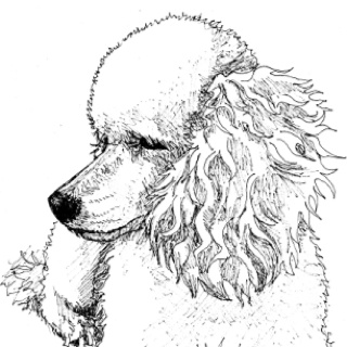 Drawn poodle themed Doodles best Dog Art Golden