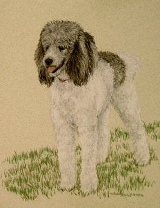 Drawn poodle themed Gray White on images Original