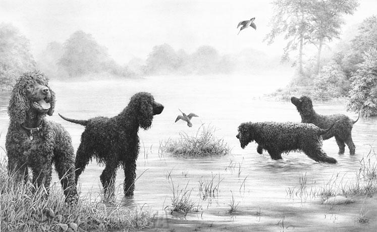 Drawn poodle water IRISH Water Mike Spaniel art