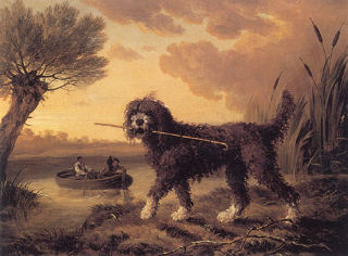 """Drawn poodle water Was Water in Dog """""""