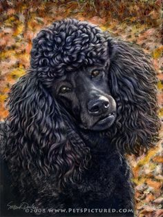 Drawn poodle water ArtistRising for http://www Poodles Google
