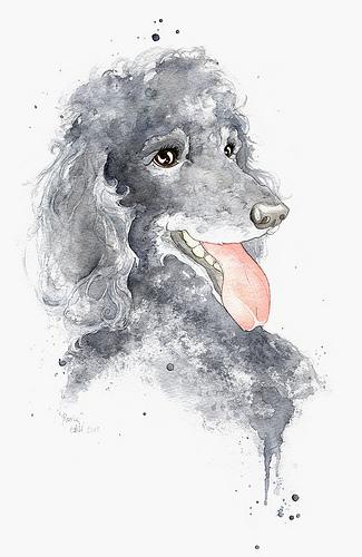 Drawn poodle watercolor 5 Poodle Portrait Poodle Original