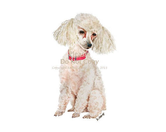 Drawn poodle watercolor In Toy Beige Ivory Painting
