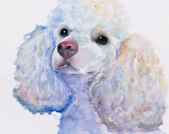 Drawn poodle watercolor White poodle watercolor poodle print