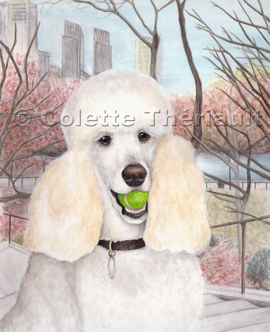 Drawn poodle watercolor Standard Pet painting Poodle Custom