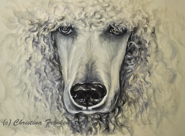 Drawn poodle watercolor On Drawing hot… White Tina57F