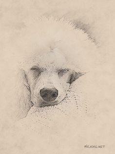 Drawn poodle watercolor 7 Watercolors jpg ed2e94f0aa39e9adb884d786ea89e383 x