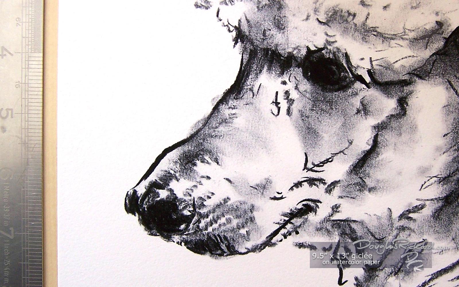 Drawn poodle watercolor Art 5