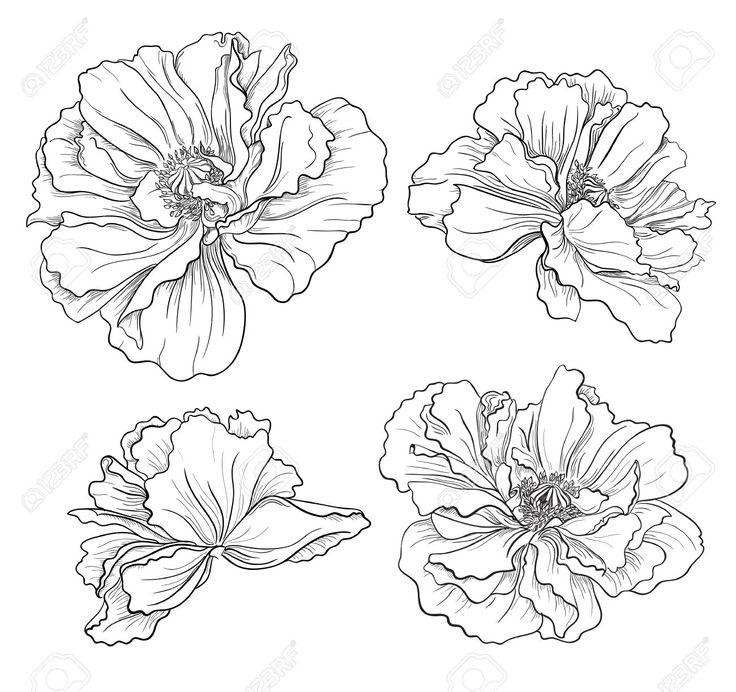 Drawn poppy Free Pinterest Illustration Poppies on