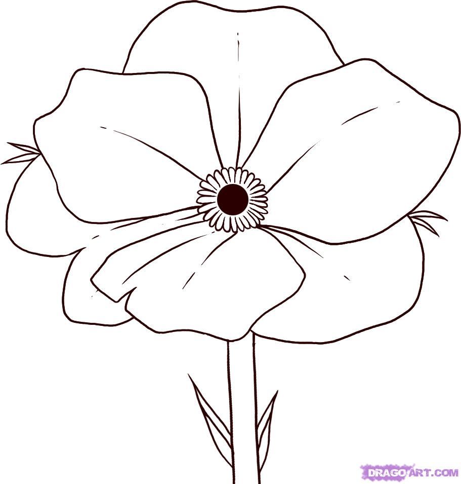 Drawn poppy To details 5 easy flowers
