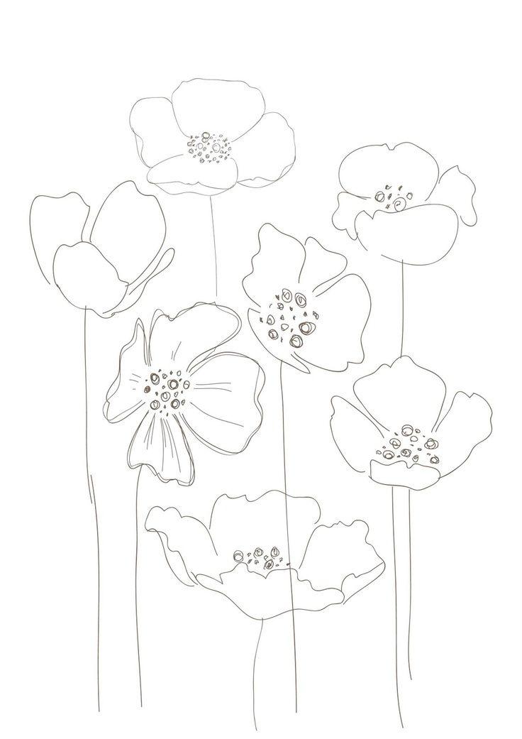 Drawn poppy amapola Best LINDISIMA on on POPPIES