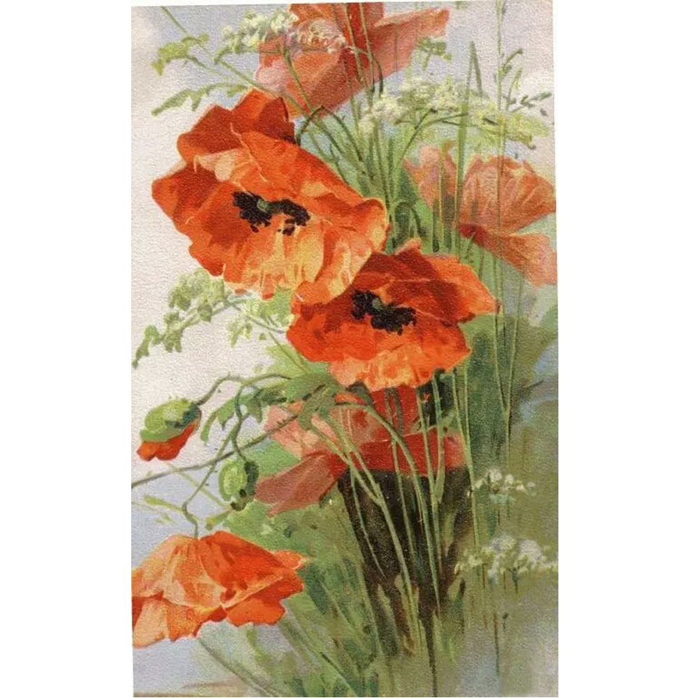 Drawn poppy 11 november Lotes de dibujo flor