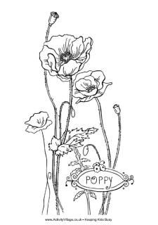 Drawn poppy anzac day Drawings Poppies Pinterest ArtPoppy field