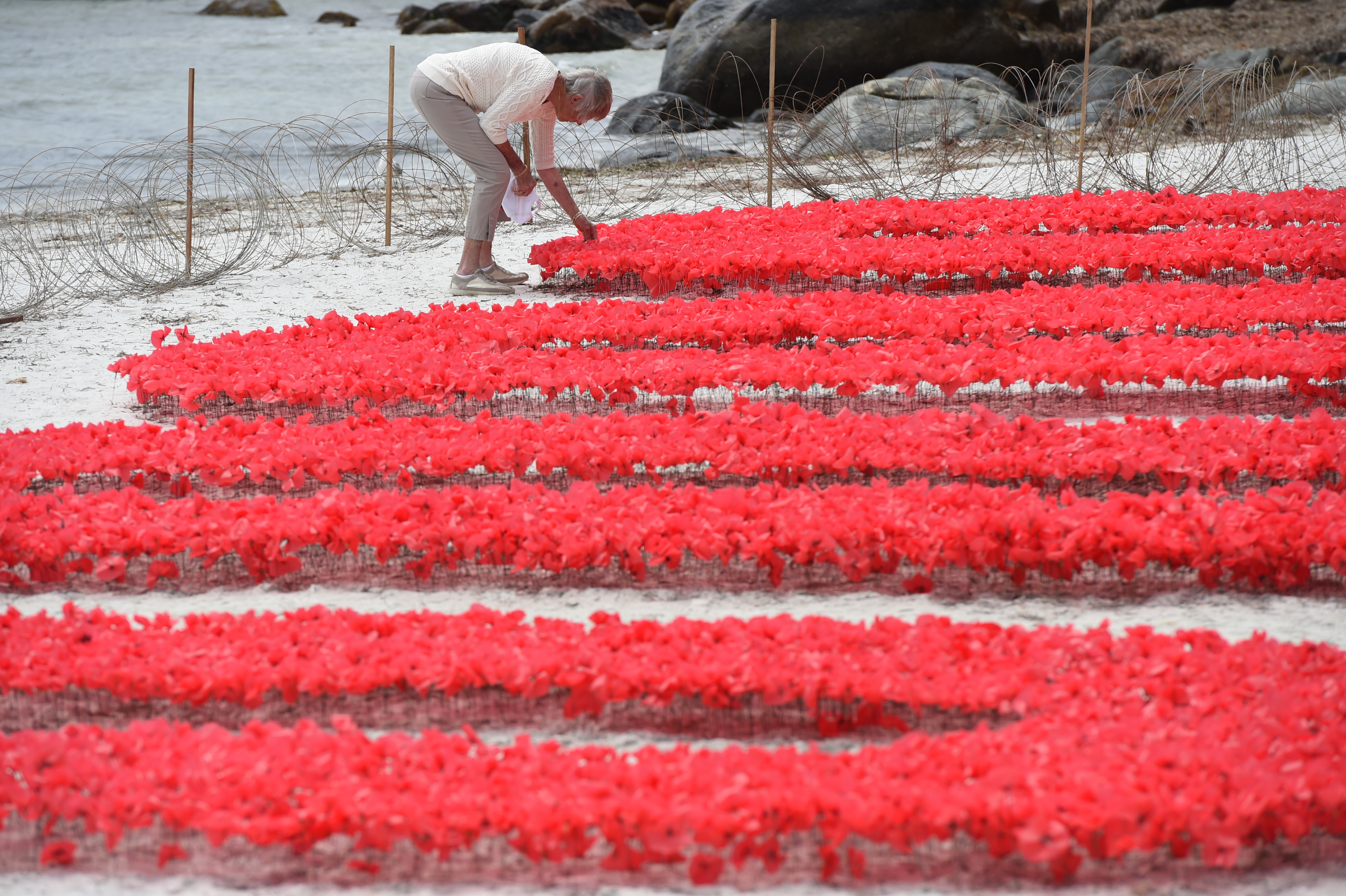 Drawn poppy anzac poppy Honour have convoy placed poppies