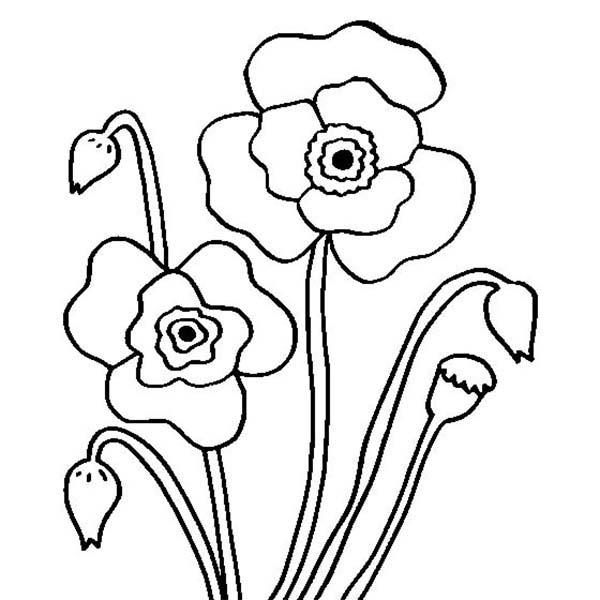 Drawn poppy arctic poppy Printable drawing (Nature) 44 –