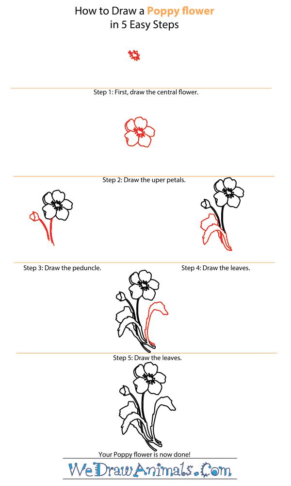 Drawn poppy arctic poppy Poppy a How How Step