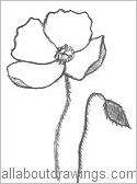 Drawn poppy arctic poppy Arctic Outline Flower Outline Drawings