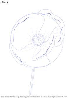 Drawn poppy australian (Poppy) Learn Step Draw Poppy