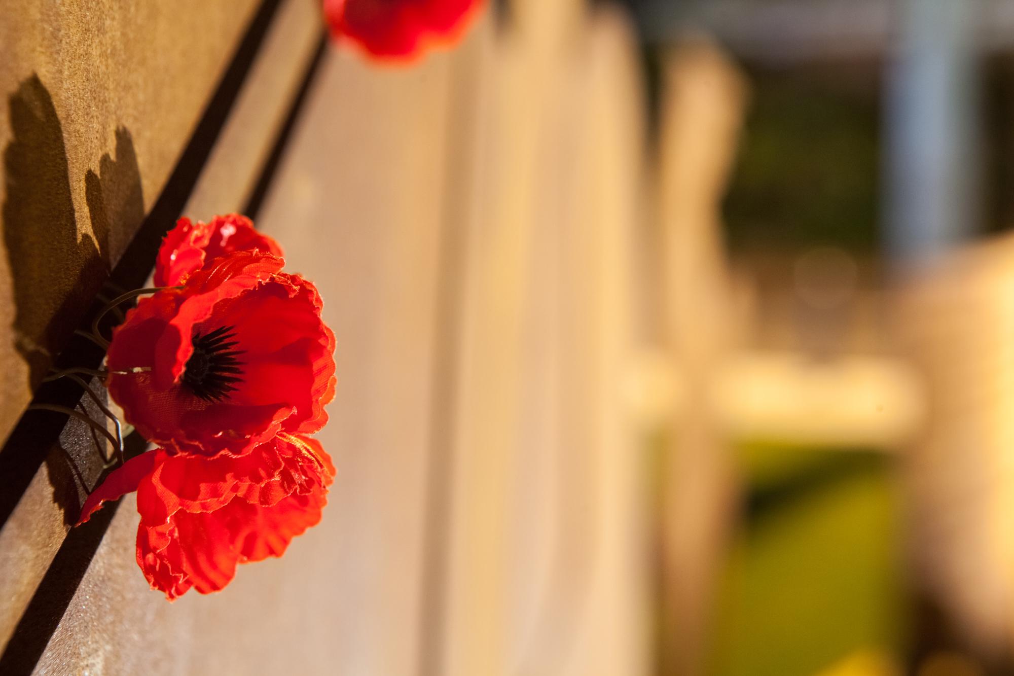 Drawn poppy australian Most Harvey sublime Western Australia