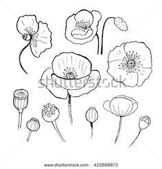 Drawn poppy australian A Image poppy how to